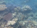 Underwater (3)