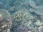 Underwater (1)